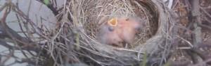 cropped-little-birds-5-13.jpg